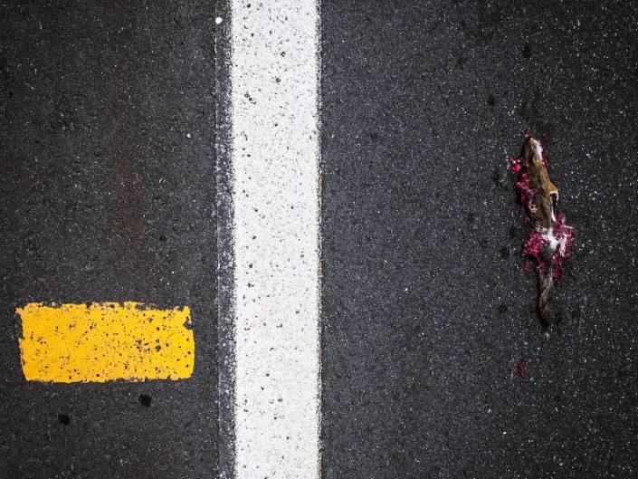 The Road Kills